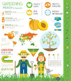 Gardening work, farming infographic. Peach. Graphic template. Fl Stock Image
