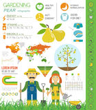 Gardening work, farming infographic. Pear. Graphic template. Fla Stock Photos