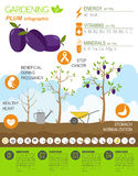 Gardening work, farming infographic. Plum. Graphic template Stock Images