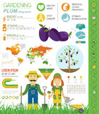 Gardening work, farming infographic. Plum. Graphic template Stock Photography