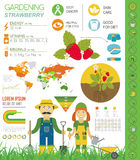 Gardening work, farming infographic. Strawberry. Graphic templat Stock Images