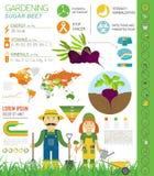 Gardening work, farming infographic. Sugar beet. Graphic templat Stock Photo