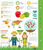 Gardening work, farming infographic.Sweet pepper. Graphic templa Stock Photos