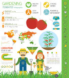 Gardening work, farming infographic. Tomato. Graphic template. F Stock Photography