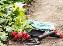 Gardening Works Royalty Free Stock Photo