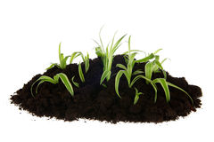 Gardening with young plants Royalty Free Stock Photography