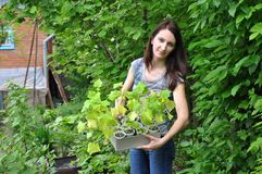Gardening: young woman with cucumber seedlings Royalty Free Stock Photo