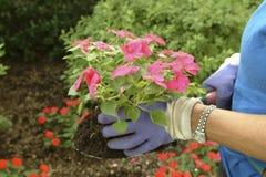 Gardening5 Stock Image