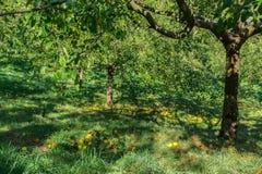 Gardenl de Apple no monte de Petrin, Praga Imagens de Stock