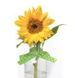 Gardenlife słonecznik Obraz Stock