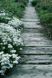 gardenpath морское Стоковое Изображение