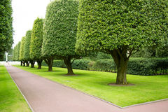 Gardens in the American cemetery Royalty Free Stock Photo