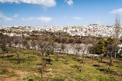 Gardens Amman in Jordan. With houses in the background, in sunny day Royalty Free Stock Photos