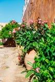 Gardens in the Basilica of Arkadi Monastery on Crete, Greece. Gardens in the Basilica of Arkadi Monastery on Crete Island, Greece Royalty Free Stock Photography