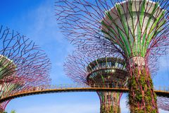 Gardens by the bay at Singapore Stock Image