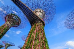 Gardens by the bay at Singapore Royalty Free Stock Photo