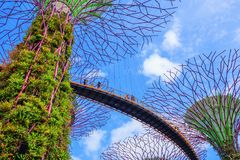 Gardens by the bay at Singapore Stock Photos