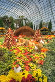 Gardens by the Bay, Flower Dome: Autumn Harvest royalty free stock photography