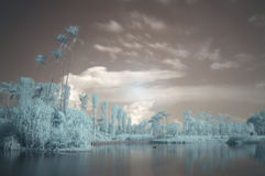 Gardens by the Bay, infrared, long exposure Stock Photo