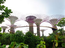 Gardens by the bay. Is a nature park spanning 101 hectares (250 acres) of reclaimed land[2] in central Singapore, adjacent to the Marina Reservoir. The park Royalty Free Stock Photo