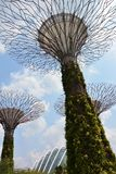 Gardens by the Bay. In Singapore Royalty Free Stock Photography