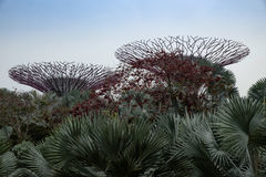 Gardens by the bay royalty free stock image