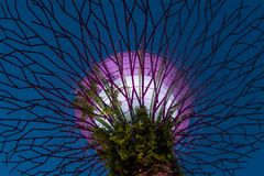 Gardens by the Bay in Singapore. SINGAPORE - FEB 22 : Supertree in Gardens by the Bay in Singapore on Februery 22 2018. It is a music and light show when trees Royalty Free Stock Photography