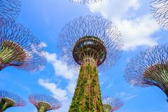 Gardens by the bay at Singapore Stock Photo