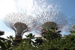 Gardens by the Bay in Singapore Stock Image