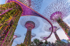 Gardens by the bay in Singapore Stock Photos