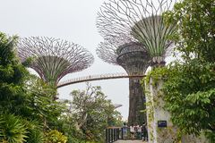 Gardens by the Bay, Singapore - March 28, 2013: People walking on the bridge between the Super Trees royalty free stock image