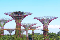 Gardens by the Bay, Singapore. Gardens by the Bay - Marina Bay Sands, Singapore - one of the most beautiful and high-technology gardens in the world Royalty Free Stock Image
