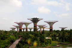 Gardens by the Bay in Singapore. Scenic view of Gardens by the Bay Park in Singapore Royalty Free Stock Image