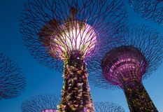Gardens by the Bay in Singapore. SINGAPORE - FEB 22 : Supertrees in Gardens by the Bay in Singapore on Februery 22 2018. It is a music and light show when trees Royalty Free Stock Photos