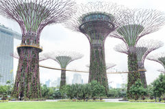 Gardens by the Bay, Singapore. Supertrees, Gardens by the Bay, Singapore Royalty Free Stock Photo