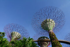 Gardens by the Bay in Singapore. Supertrees at Gardens by the Bay in Singapore. Gardens by the Bay provides mesmerising waterfront views across three gardens Royalty Free Stock Photo