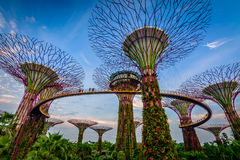 Gardens by the bay Singapore. Supertrees in Gardens By the Bay, situated in marina bay area in Singapore, it's a new design garden with innovative Royalty Free Stock Photos