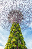 Gardens by the Bay Singapore. Supertrees in Gardens By the Bay, situated in marina bay area in Singapore, it's a new design garden with innovative stock images