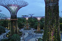 Gardens by the Bay, Singapore at twilight Stock Photos