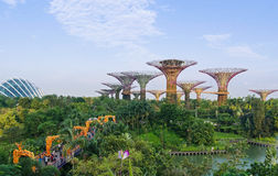 Gardens by the Bay on a Sunday Stock Photo