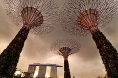 Gardens by the Bay. Super trees at Gardens by the Bay, Singapore Stock Image