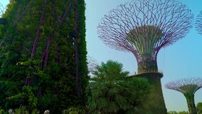 Gardens by the Bay SuperTree Grove Dolly Move