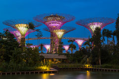 Gardens by the Bay - SuperTree Grove Royalty Free Stock Photography