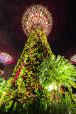 Gardens by the Bay - SuperTree Grove Royalty Free Stock Images