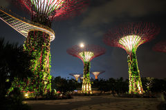 Gardens by the Bay - SuperTree Grove in Singapore Stock Image