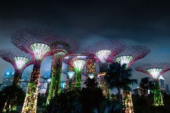 Gardens by the Bay or SuperTree Grove Stock Images