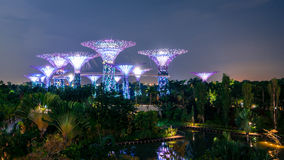 Gardens by the Bay 'Supertrees'. Singapore City, Singapore - November 5, 2014: Gardens by the Bay 'Supertrees' lit up at night in Singapore City Stock Photo