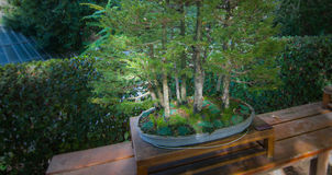 Gardens in the city of Madrid`s Retiro park.   Madrid garden park Spruce tree miniature exhibit. Stock Image