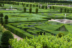 Gardens with the flourishing lavende Royalty Free Stock Images