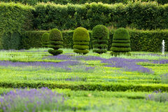 Gardens with the flourishing lavender Royalty Free Stock Photos